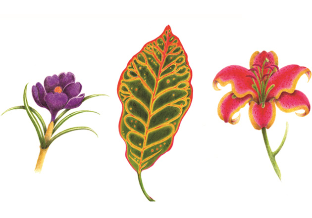 Botanical Trio